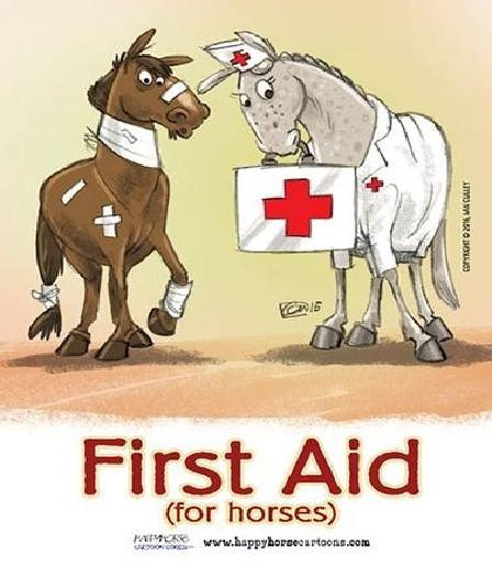 Equine First Aid and Bandaging